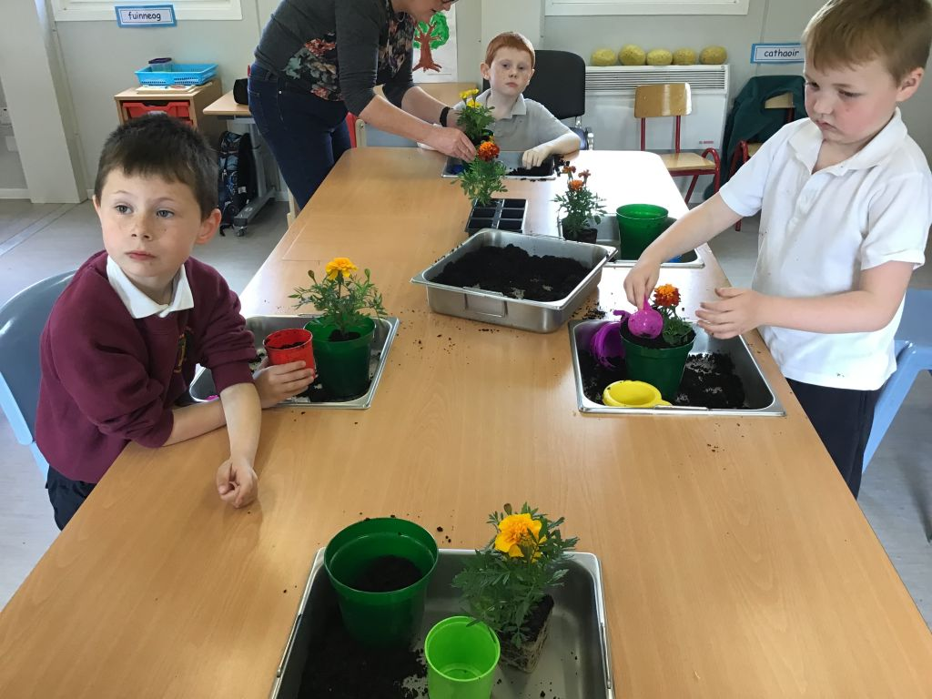 Planting and watering our flowers!