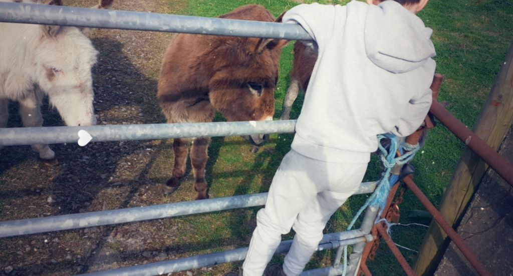 Mikey feeding apples to the donkeys while out on his daily walk.